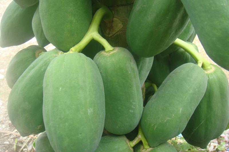 科学网-郭沫若热带经济作物诗图解之一--木瓜累